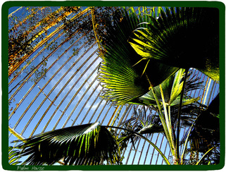 gardens,glasshouse,hot house,palm