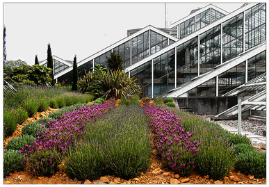 gardens,flowers,glasshouse,greenhouse