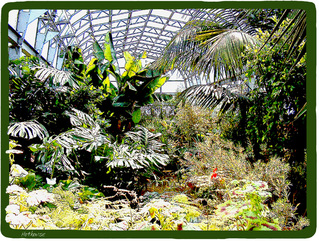 gardens,glasshouse,hot house