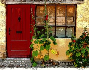 Old cottage with hollyhocks art print